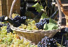 Крымские виноделы готовятся «штурмовать» китайский рынок