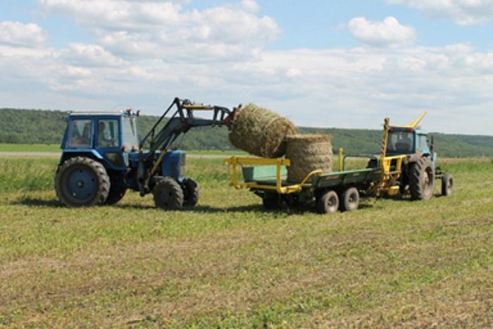 Минсельхоз России: на 10 октября заготовлено 29,4 млн тонн грубых и сочных кормов