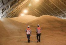 Минсельхоз заплатит 20 млн за концепцию развития экспорта сельхозпродукции в Китай