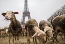 Печальная статистика о суицидах среди фермеров Франции