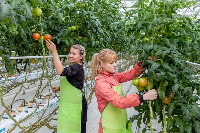 Первая в России овощная смарт-ферма заработала в инновационном кластере Сколково