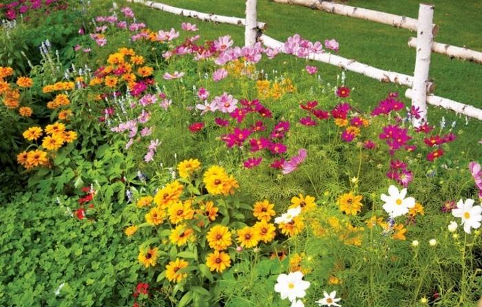 Под зиму можно сеять летники, двухлетние и многолетние цветы.