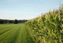 «Покровский» внедряет методы биологизированного земледелия и цифровизации
