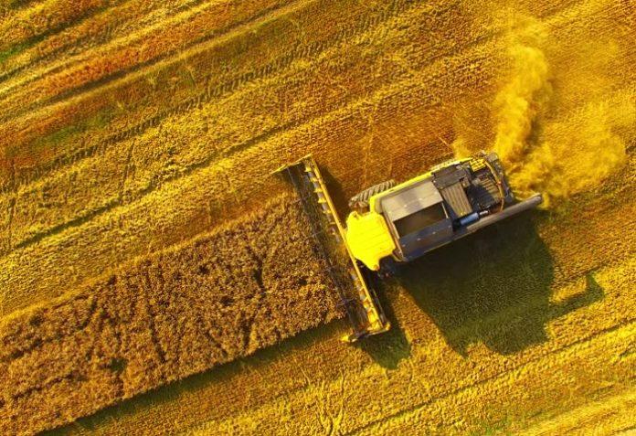 Принесли в жатву: останется ли Россия лидером на мировом рынке зерна