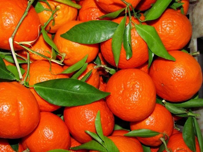 Россельхознадзор не пустил в Россию зараженные мандарины из Турции