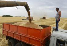 Россельхознадзор усилил контроль за погрузочными площадками зерна на Кубани и в Ростове