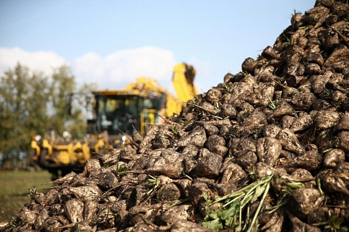 Российские аграрии полностью заместят импорт украинской сельхозпродукции