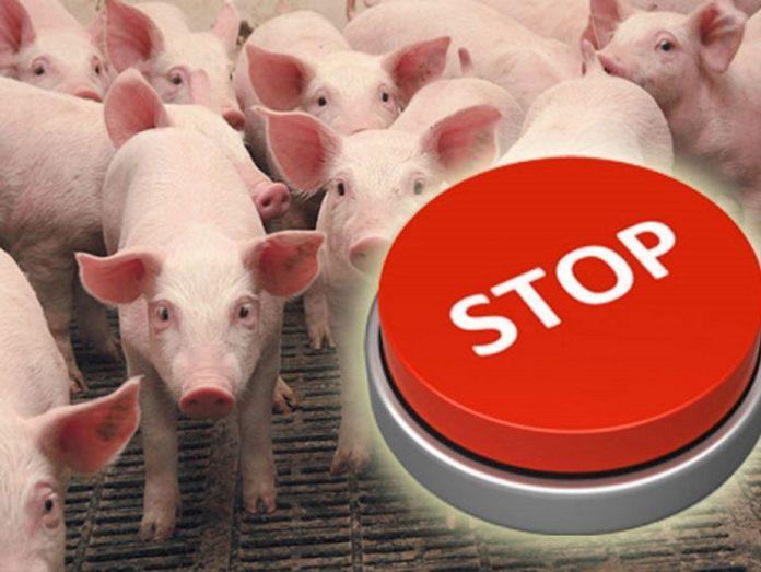 США закрывают границы для польской свинины
