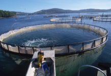 Сахалинские депутаты внесли в Госдуму законопроект по выращиванию аквакультуры