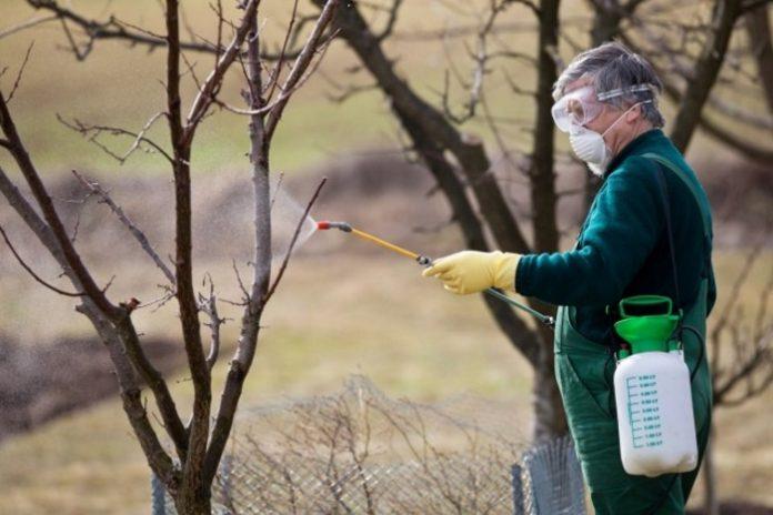 Где зимуют вредители сада и как испортить им жизнь?