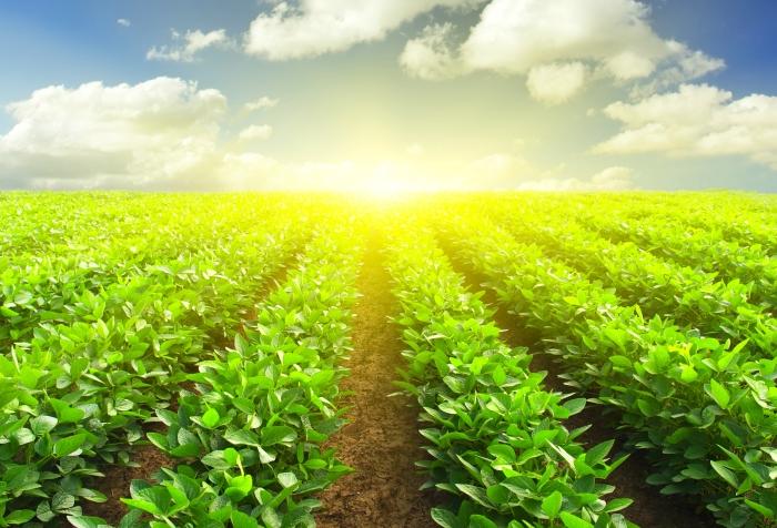 В Подмосковье хотят создать кластеры по переработке сельхозпродукции