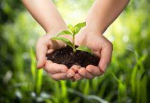 Севастопольские ученые разработали экономичную технологию экологичных удобрений