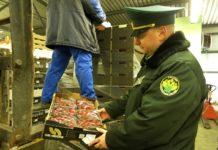 Штрафы на ввоз санкционных продуктов могут увеличить в 10 раз