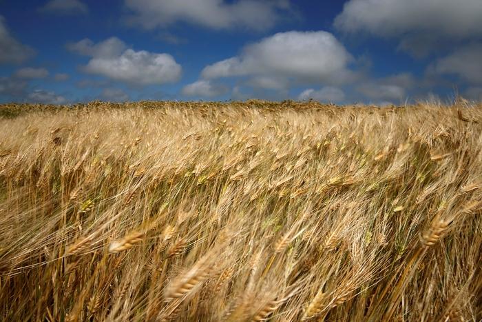 Уборка зерновых практически завершилась на полях Нижегородской области
