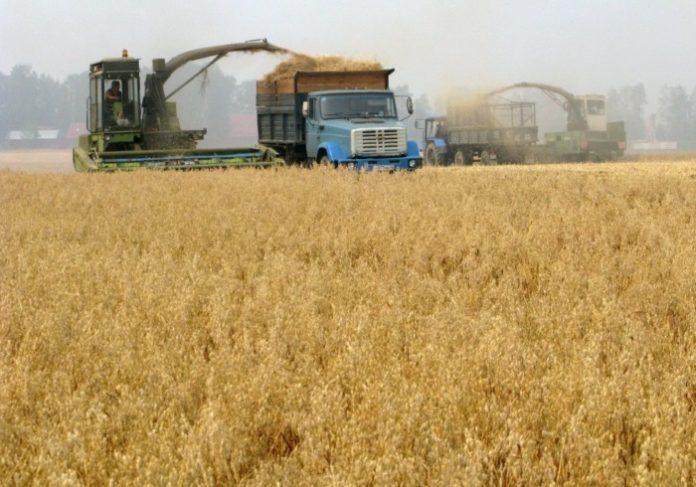 Уборку зерновых завершили в Нижегородской области