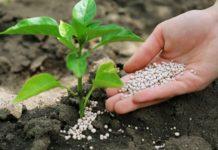 Украинские сельхозпроизводители терпят убытки из-за эмбарго на импорт российских удобрений