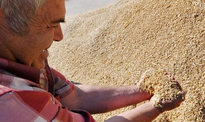 Урожай зерна превысил 100 млн тонн