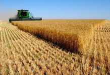 Урожай зерна в Татарстане снизился на четверть