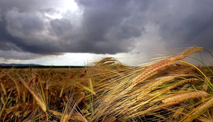 Ущерб аграриев от ЧС достиг 6,6 млрд рублей