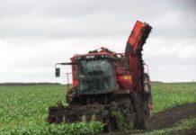 В Буздякском и Благоварском районах Башкортостана валовый сбор сахарной свеклы превысил 100 тысяч тонн