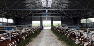 В Челябинской области пустили в эксплуатацию ферму на 360 голов