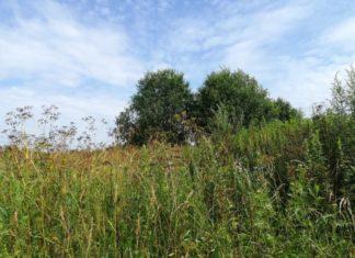 В Навлинском районе Брянской области зарастают более 49 гектаров земель сельскохозяйственного назначения
