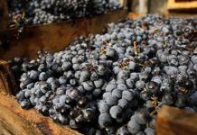 В России впервые пройдет акция по продвижению отечественных вин