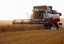Валовой сбор зерновых в Новосибирской области превысил 2 млн. тонн