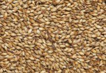Вьетнам ввел запрет на ввоз пшеницы из-за рубежа