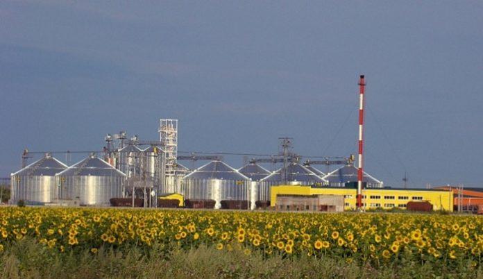Заводы по переработке подсолнечника и кукурузы откроются в Волгоградской области