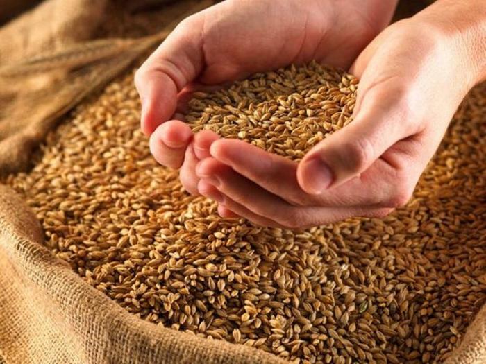 Зерновой союз и РЭЦ разработают отсрочку платежа для покупателей российского зерна