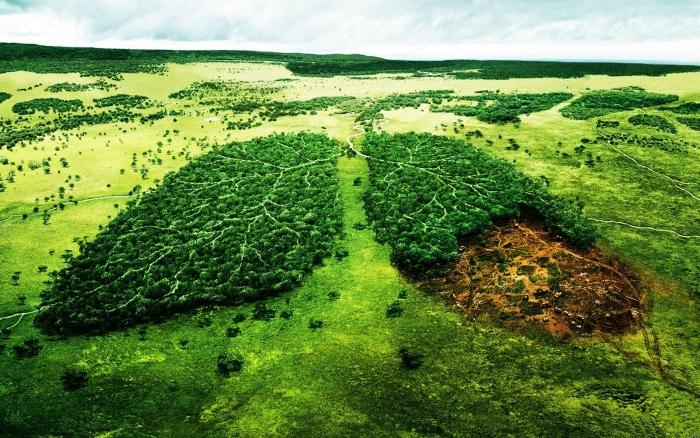 Животноводство убивает планету