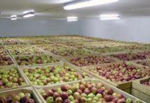 «АгроБелогорье» строит склад для хранения фруктов в Белгородской области