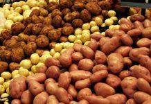 Более 600 млн рублей направят на развитие российского семеноводства картофеля