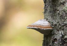 Грибы-паразиты на деревьях — профилактика и меры борьбы