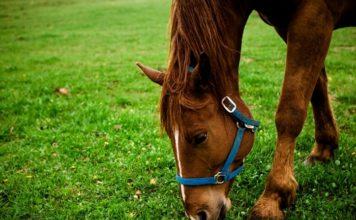 Инфекционные заболевания лошадей