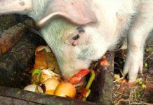 Как откормить свинью