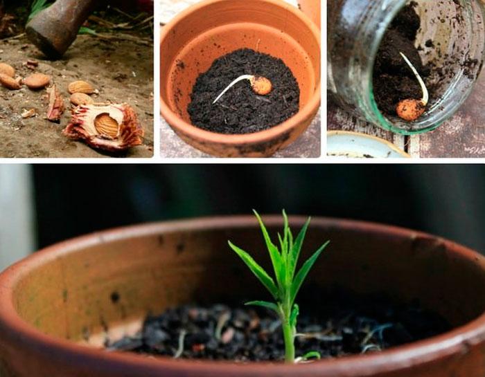Как вырастить из косточки