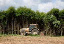 «Мираторг» направил более 159 млн рублей в возвращение заброшенных земель в сельхозоборот