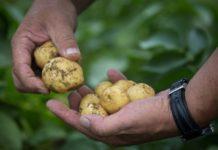 Начинающим фермерам Липецкой области дополнительно выделят более 39 млн рублей