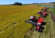 Объем госсубсидий на агрострахование может достигнуть 4 млрд руб. в 2019 году