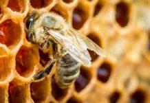 Пчелиный дом: в «Сколково» создают умный улей