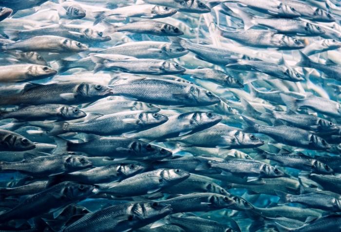 Пензенская область активно развивает рыбоводческую отрасль