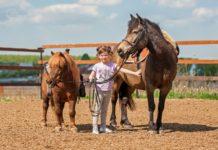 Пони – тоже кони
