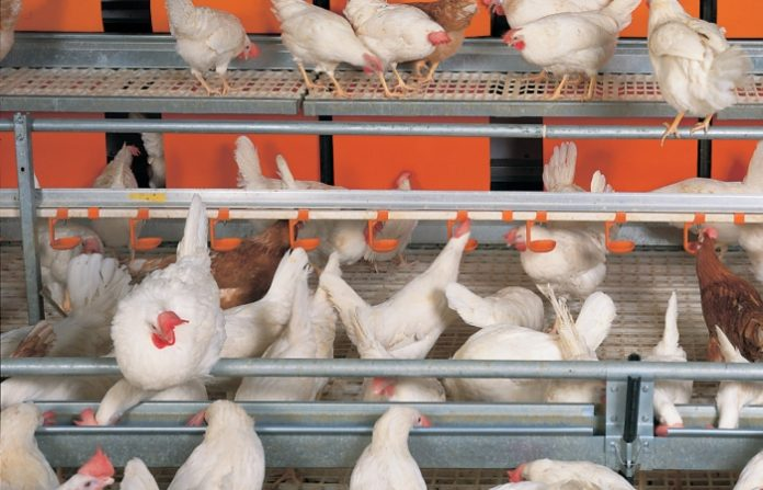 Россельхознадзор временно запретил ввоз птицы и яиц из Казахстана