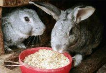 Способы убоя кроликов