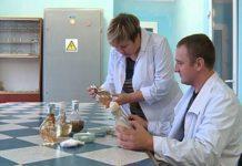 Ультраскороспелый сорт сои разработали в Приамурье