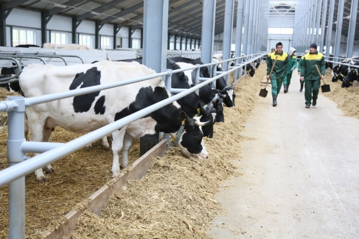 Photo of В Башкортостане растет молочная продуктивность