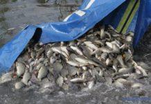 В Пензенской области осуществили зарыбление озера Затон