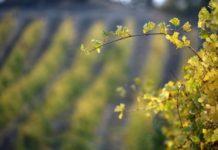 В Республике Крым отметили День работника сельского хозяйства и перерабатывающей промышленности